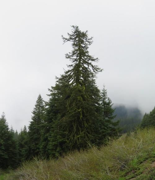 MAC TREE