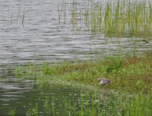 SPSA-EM LAKE