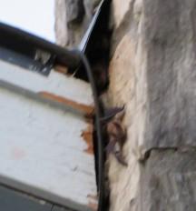 BAT OUT