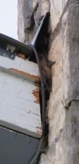 BAT WING2