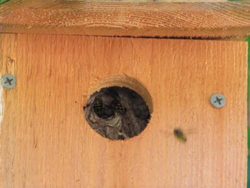 BEE BOX3 (1)