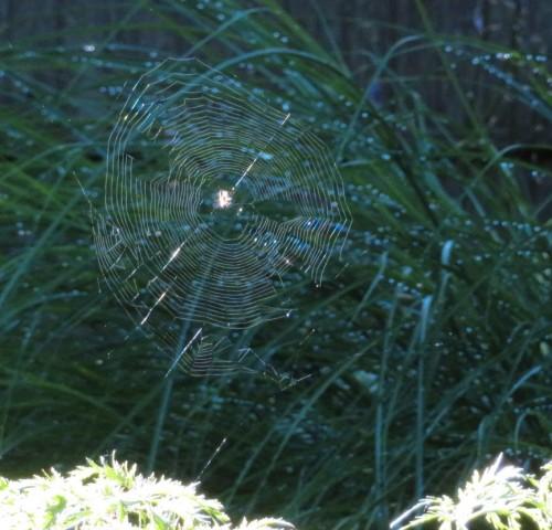 web-b