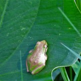 frog5