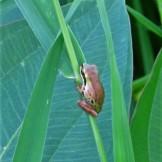 frog8