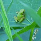 frog9