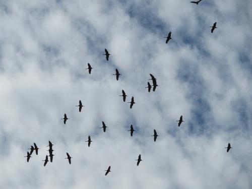 cranes abov