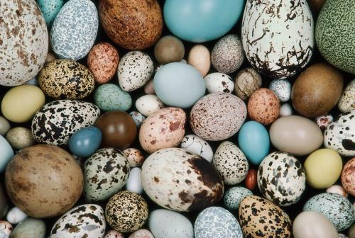 birds egg collage