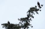 egle-fir5