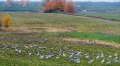 filled field