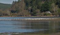 gull shoal