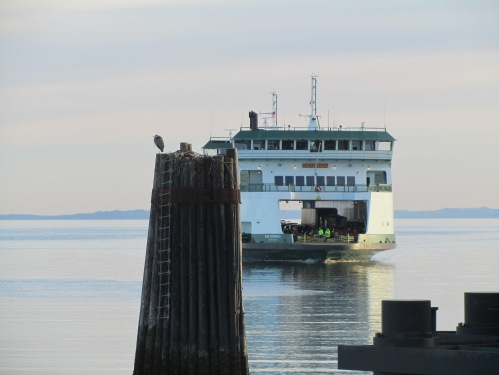 Whidbey Is Feb 9, 2011 071