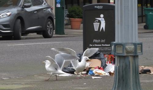 gulls-pland