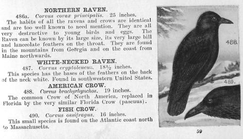 raven4--reed 1915