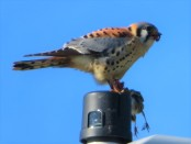 BIRD EATS BIRD2