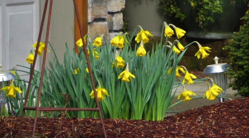 DAFFS-FEB