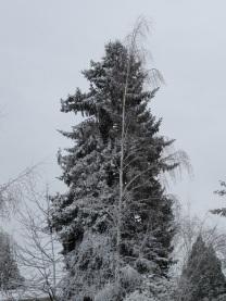 SNOWD