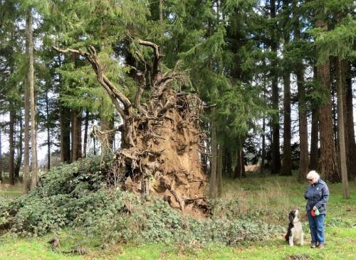 TREE BASE (2)