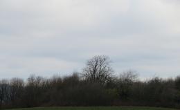 egl-tree1