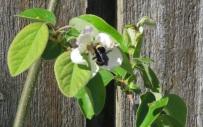 QINCE BEE (2)