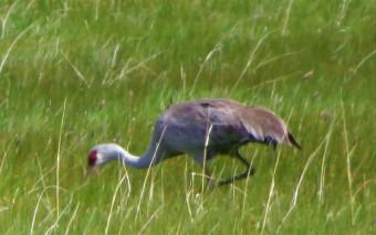 crane feed (2)