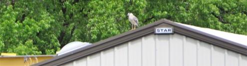 roof heron