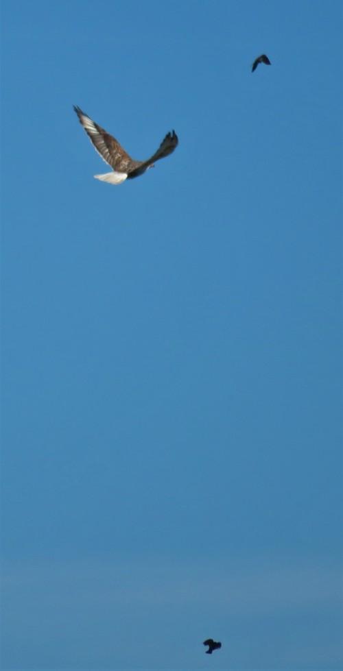 ferru fly-a (2)