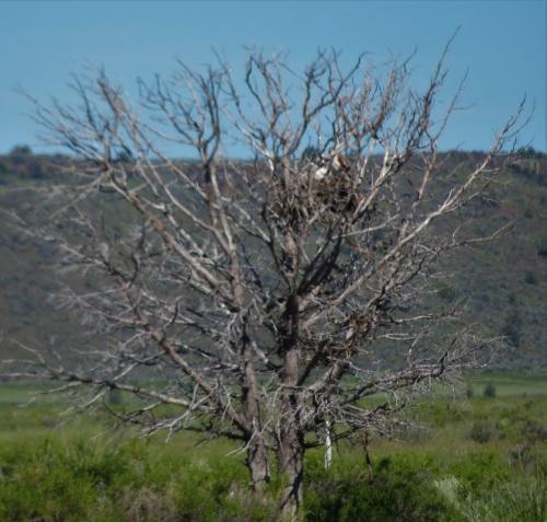 ferru nest-no2 (2)