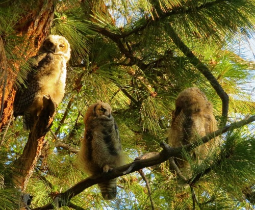 ghowlets (2)