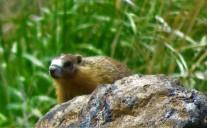 mrmt rodent (2)