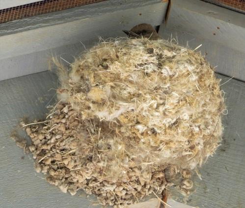 sp nest-sage (2)