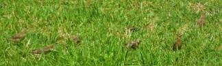 C-BIRDS2 (2)