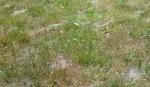 WEBS IN GRSS(2)