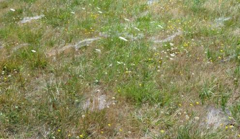 WEBS IN GRSS (2)
