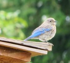 blu baby (2)