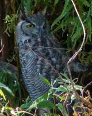 owl in wilo (1008x1280)