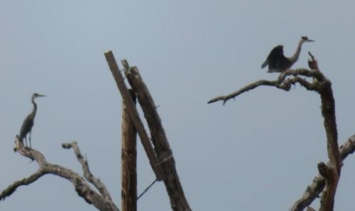 perch (2)