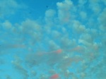 SKY-D (2)