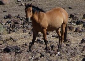 w-horse2 (1280x960)