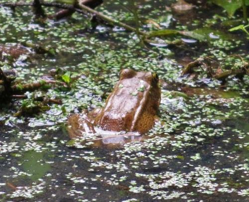 bfrog (2)