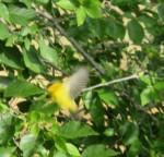 wiwa fly (2)
