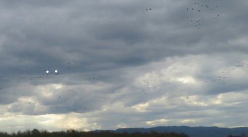 cloudsky-cranes (2)_LI