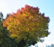 foliag2