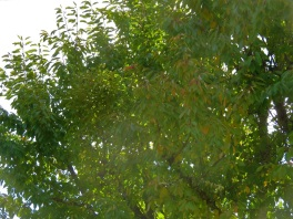 foliag3