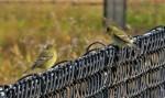 lego fence (2)