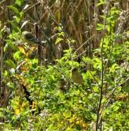 lego weeds (2)