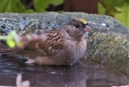 gcsp baths (2)