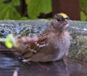 gcsp baths2 (2)