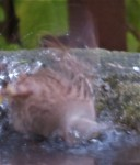 gcsp baths3 (2)