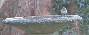 JNC-BATH (2)