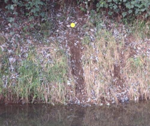 otter slide_LI (2)